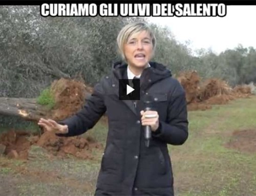 Nadia Toffa durante le riprese tra gli ulivi nel Salento. #2