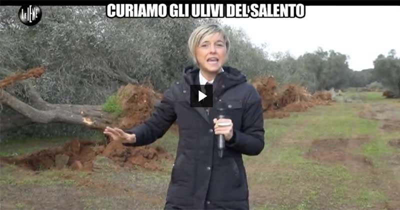 Xylella, eradicazioni e responsabilità: Nadia Toffa in Salento